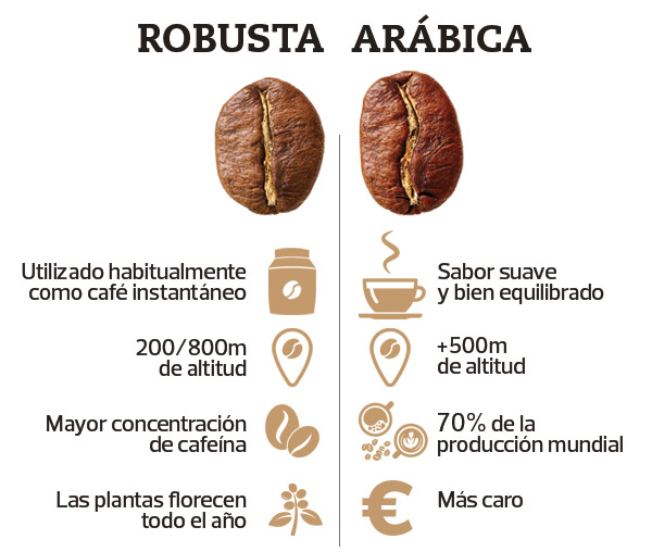 cafe robusta y arabica