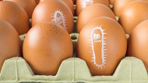consumir-huevos-sin-salmonela