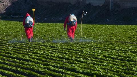 pesticidas-alimentos