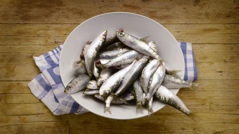 Mercurio pescado