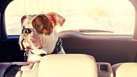 viajar-en-coche-con-perro