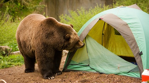 Seguridad camping
