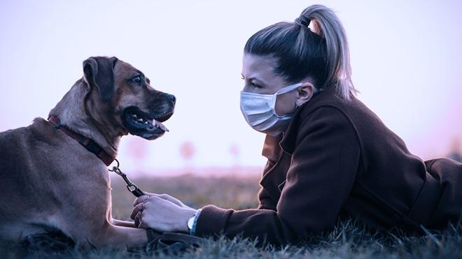 Mascotas y coronavirus: respuestas a sus dudas