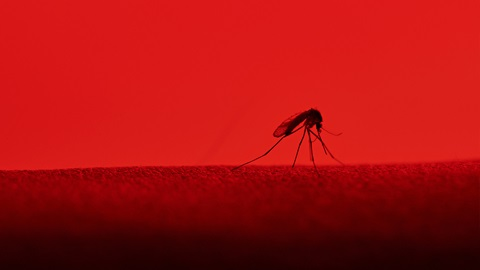 Infecciones emergentes