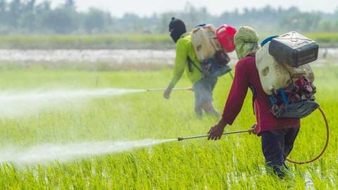 pesticidas arrozal trabajadores campo agricultura monsanto quimica cancer
