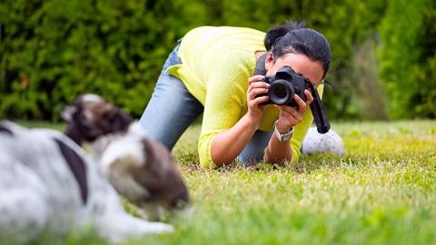 fotos-mascotas