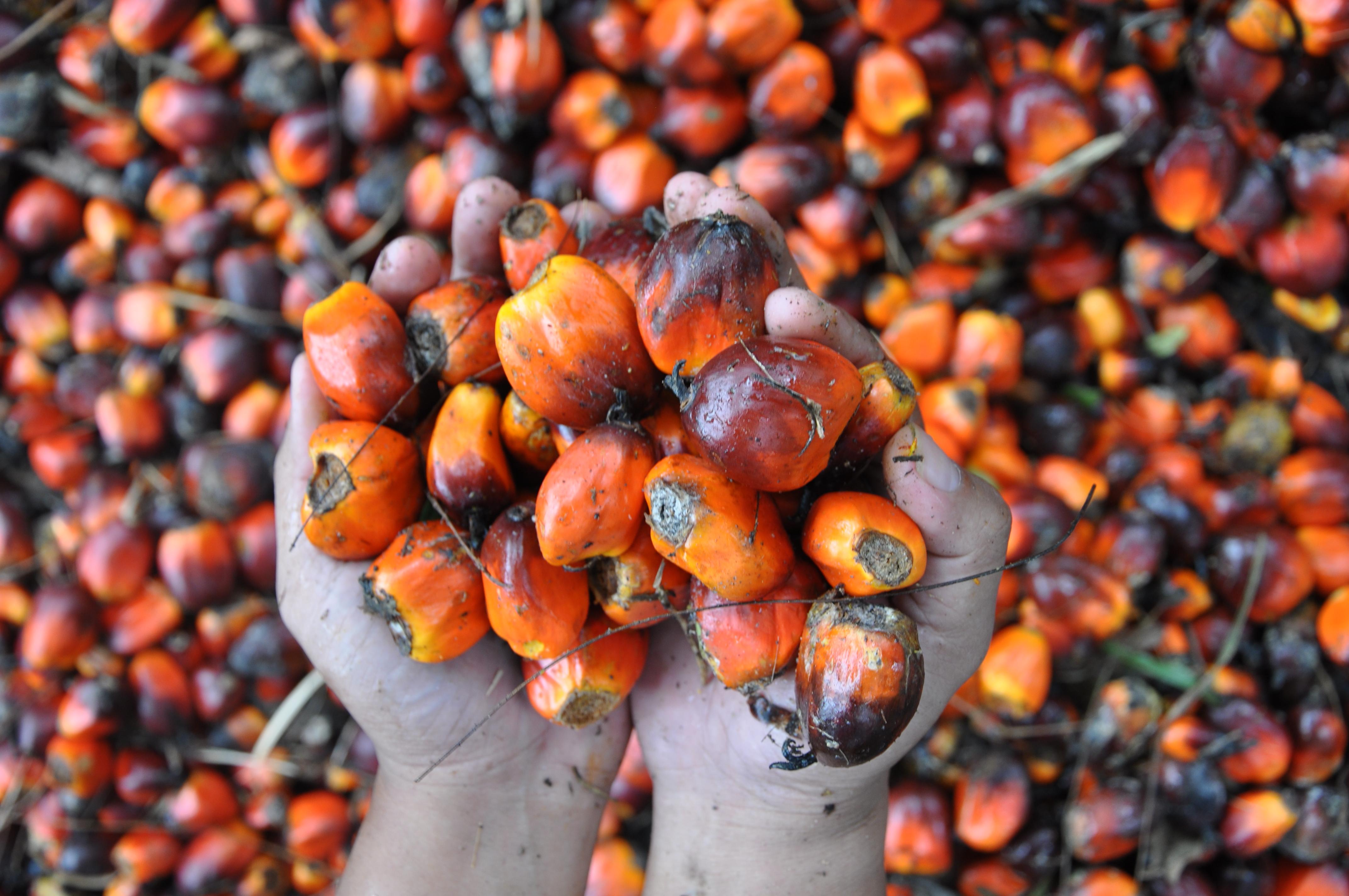 Resultado de imagen de aceite palma