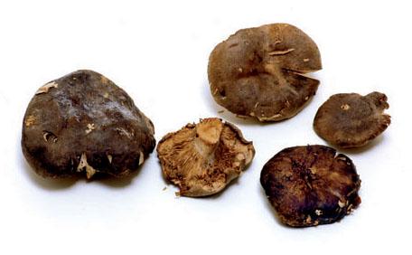 el champiñon es una hortaliza o verdura