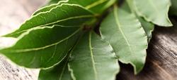 Diez hierbas arom ticas para plantar y cocinar - Plantar hierbas aromaticas ...