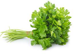 hierbas aromáticas cilantro