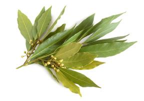 hierbas aromáticas  laurel