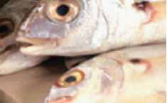 Anisakis pescado