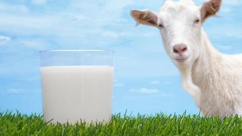 Alergia leche de cabra