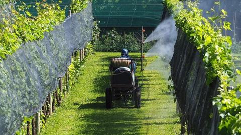 Pesticidas en el vino