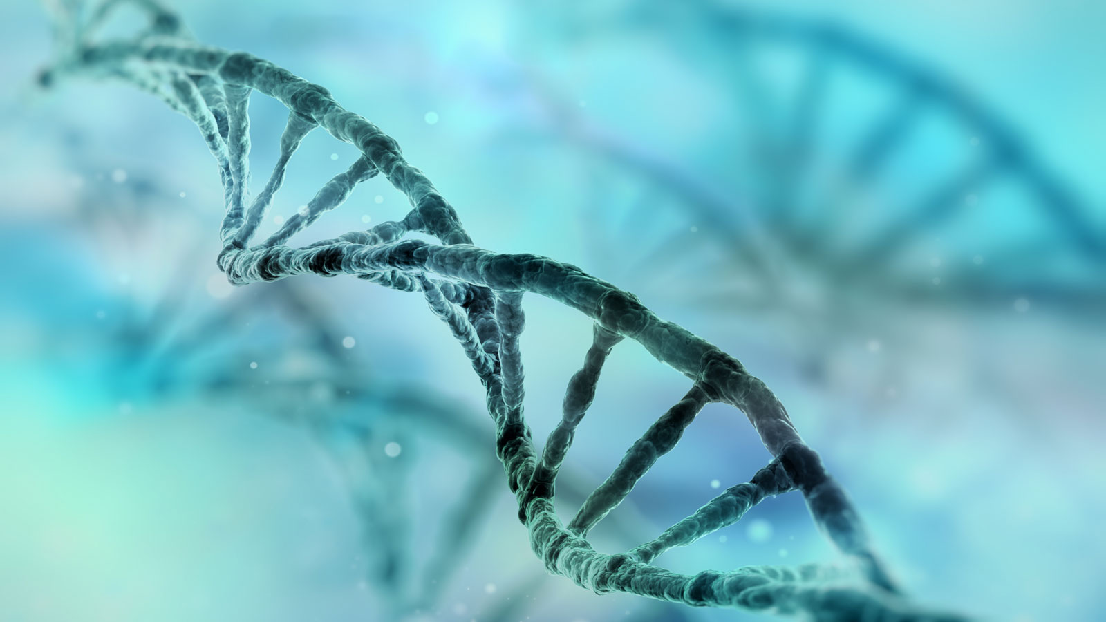 Test genéticos